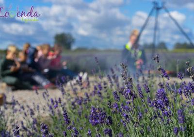 lawendowe-pole-dla-dzieci27