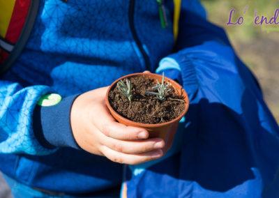 lawendowe-pole-dla-dzieci28
