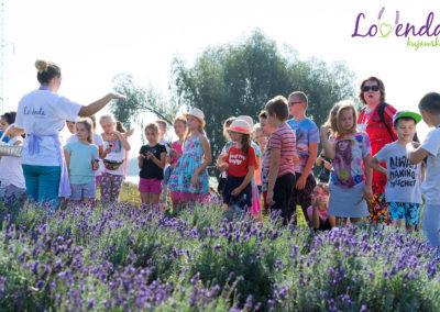 lawendowe-pole-dla-dzieci32
