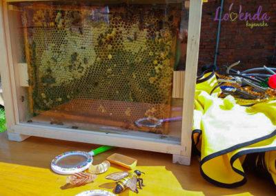 lawendowe-pole-warsztaty-pszczolki-6
